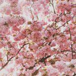 【復活愛の奇跡】 イギリス人の友人が日本人の彼女と復縁して国際結婚した話